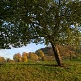 herfst nabij Frensjerhofke