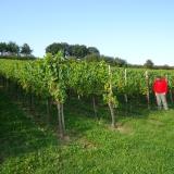 Frensjerhofke vakantiewoningen wijngaarden