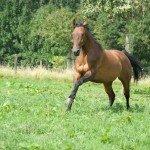 Paardensport in en nabij Limburg